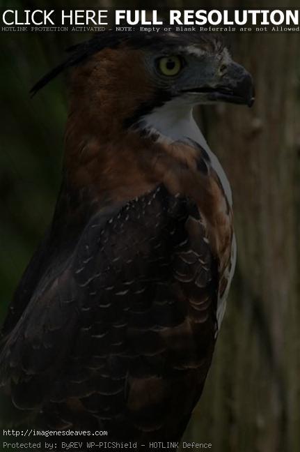 Fotos bonitas de aves para usar como fondo de pantalla del celular