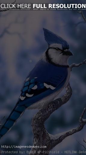 Imagenes del Pajaro Jay azul Para Fondo Celular