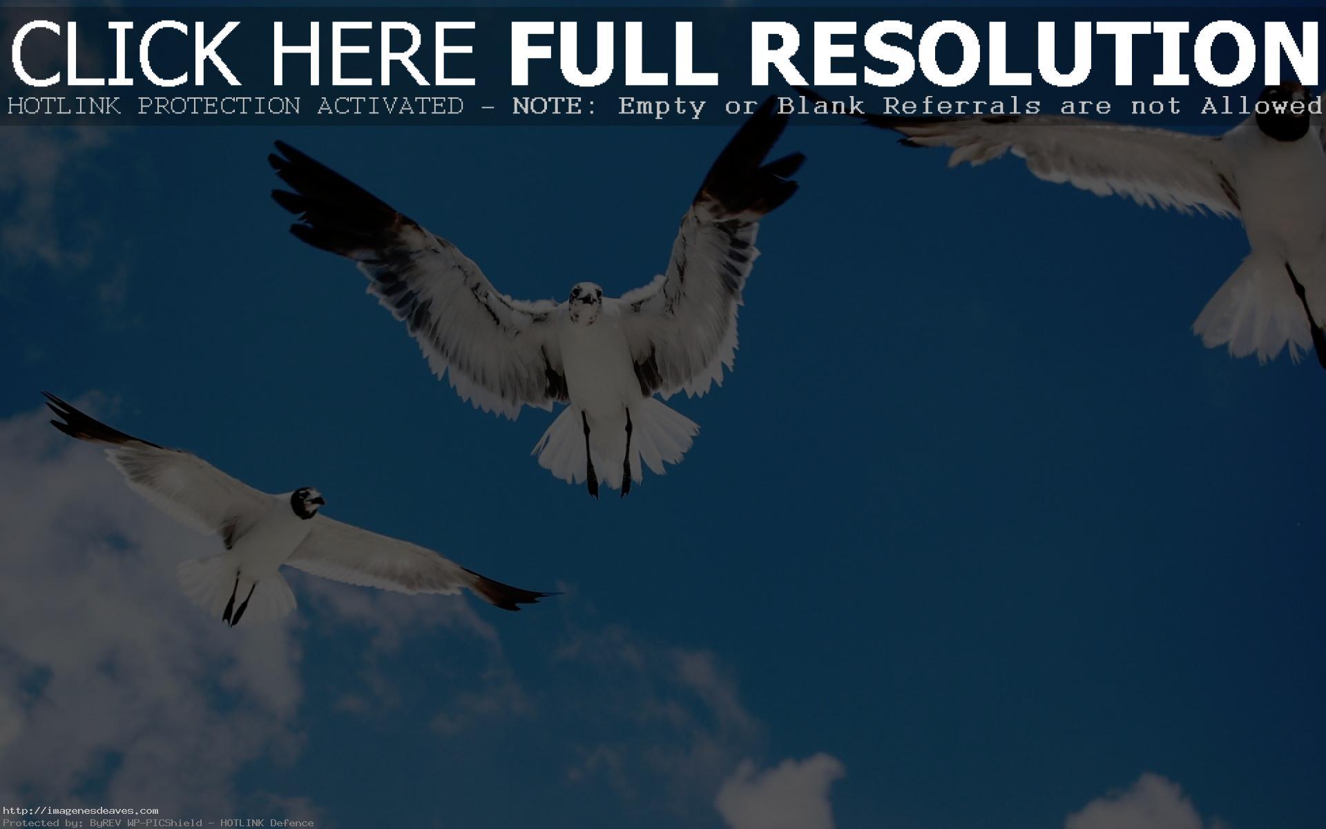 Bellas imagenes de albatros para fondo de pantalla