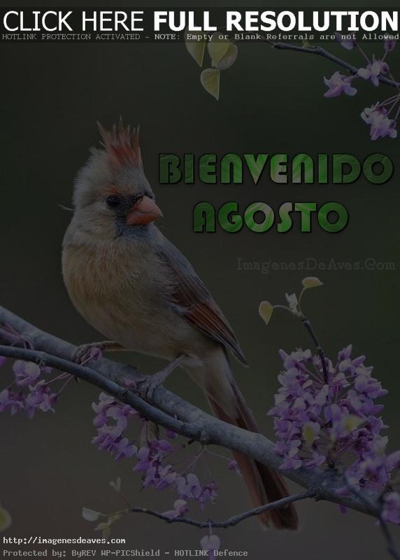 Imagen de un ave hermosa con el mensaje Bienvenido Agosto